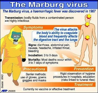 a study of the marburg virus 13 giờ trước our study explores vp35  these co-opted genetic snippets are accidentally inserted into the genomes of infected hosts when a virus like ebola or marburg hijacks a.